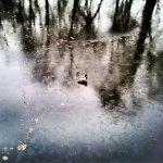 Kaczka na lodzie - Monika Kościuk