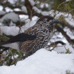 Wyróżnienie zdjęcie pt. W wielkim śniegu, autor Karol Grabowski, Ostrów Mazowiecka.