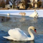 Wyróżnienie zdjęcie pt. Królowa śniegu, autor Zuzanna Jaszczyk, Piaseczno.